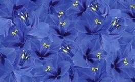 Fundo azul floral das flores do hippeastrum Papel de parede floral Fotos de Stock