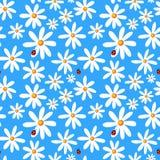 Fundo azul sem emenda com camomiles e joaninha ilustração stock