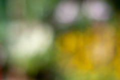 Fundo blury da mola Imagem de Stock