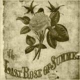 Fundo boémio floral do estilo de Rosa ilustração stock