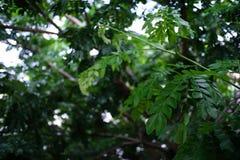 Fundo bonito borrado da natureza obscuro da floresta do bokeh da folha Fotografia de Stock