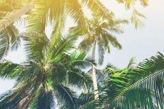Fundo bonito com palmeiras tropicais Vista de baixo para cima sobre das palmeiras contra o céu fotos de stock royalty free