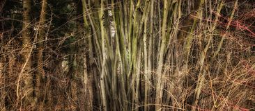 Fundo bonito da floresta Foto de Stock