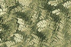 Fundo bonito da folha, árvores do encanto na luz solar ilustração stock