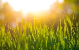 Fundo bonito da grama verde Imagem de Stock