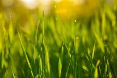 Fundo bonito da grama verde Fotos de Stock