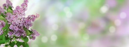 Fundo bonito da mola Flores lilás em um fundo borrado Fotos de Stock