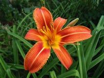 Fundo bonito da natureza Fundo da flor Foto de Stock