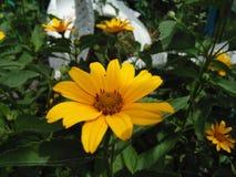 Fundo bonito da natureza Fundos da flor Fotos de Stock Royalty Free
