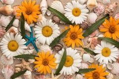 Fundo bonito das camomilas, dos shell, das estrelas de mar e da folha verde na areia Foto de Stock