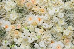 Fundo bonito das flores para o casamento Fotos de Stock