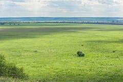Fundo bonito de Bush ou de uma árvore só em um prado, em uma linha do horizonte e em um céu verdes com nuvens Fotografia de Stock Royalty Free