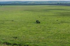 Fundo bonito de Bush ou de uma árvore só em um prado, em uma linha do horizonte e em um céu verdes com nuvens Fotos de Stock