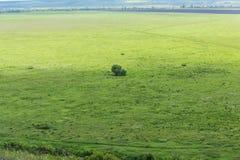 Fundo bonito de Bush ou de uma árvore só em um prado, em uma linha do horizonte e em um céu verdes com nuvens Imagens de Stock