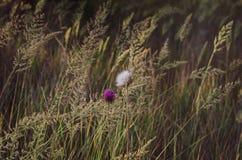 Fundo bonito de ervas e de flores selvagens na luz solar da manhã Cores brilhantes Foco seletivo macio Positivo do verão foto de stock royalty free