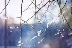 Fundo bonito do inverno do borrão com gelo e neve em ramos imagem de stock