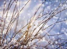 Fundo bonito do inverno do borrão com gelo e neve em ramos fotografia de stock