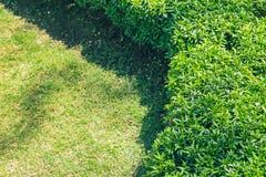 Fundo bonito do parque do jardim da grama verde de Cutted fotografia de stock