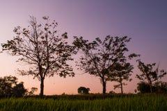 Fundo bonito do por do sol e do céu sobre os campos do arroz no feriado da noite no campo de Tailândia Imagens de Stock Royalty Free