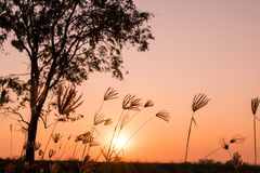 Fundo bonito do por do sol e do céu sobre os campos do arroz no feriado da noite no campo de Tailândia Imagem de Stock