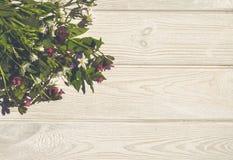 Fundo bonito do verão Wildflowers e madeira branca Fotografia de Stock