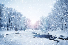 Fundo bonito e nevado da floresta do inverno Imagem de Stock Royalty Free