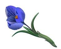 Fundo bonito no branco para um cartão, um açafrão da flor da bandeira Fotos de Stock Royalty Free