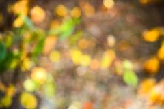 Fundo borrado abstrato com os pontos amarelos e verdes fotos de stock
