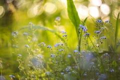 Fundo borrado brilhante abstrato com mola e verão com as flores e as plantas azuis pequenas Com bokeh bonito na luz solar imagens de stock royalty free