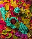 Fundo borrado da árvore do outono com o copo cozinhando quente do chá imagens de stock