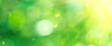 Fundo borrado da natureza sumário bonito Contexto verde do bokeh Fundo do verão ou da mola com alargamentos do sol imagem de stock