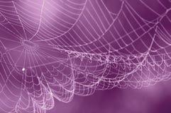 Fundo borrado da Web de aranha Fotos de Stock Royalty Free