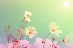 Fundo borrado dos campos de flor, cor retro do estilo imagens de stock
