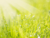 Fundo borrado natural bonito da grama verde foto de stock