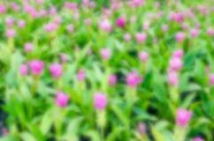 Fundo borrado sumário da flor Fotos de Stock Royalty Free