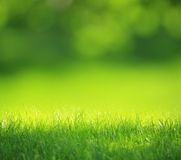 Fundo borrado verde Imagens de Stock Royalty Free