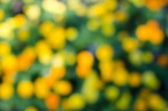 Fundo borrado verde e amarelo fotografia de stock