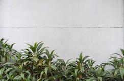Fundo branco da cor do cimento natural ou da textura velha de pedra da parede com folha imagem de stock