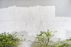 Fundo branco da cor do cimento natural ou da textura velha de pedra da parede com folha imagens de stock