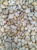 Fundo branco da pedra da rocha Imagem de Stock Royalty Free