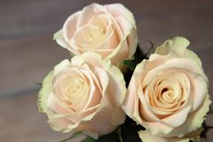 Fundo branco das rosas Natureza, flores, ramalhete Fotos de Stock