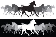 Fundo branco e preto da silhueta dos cavalos trotando Imagens de Stock
