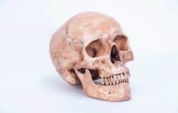Fundo branco isolado crânio Foto de Stock Royalty Free