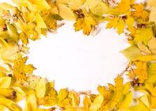 Fundo branco oval da beira n do quadro das folhas de outono, vista superior, espaço da cópia imagens de stock royalty free