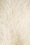 Fundo branco peludo Fotografia de Stock Royalty Free
