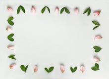 Fundo brilhante com um quadro das flores e das folhas imagem de stock royalty free