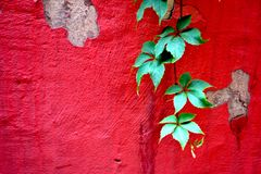 Fundo brilhante da parede com uma planta fotografia de stock