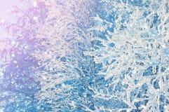 Fundo brilhante do inverno fotografia de stock royalty free