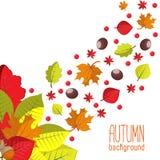 Fundo brilhante do outono para o convite ou o molde do anúncio com a grinalda das folhas, das sementes e das porcas Imagens de Stock Royalty Free