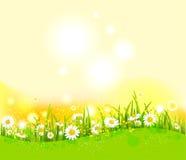 Fundo brilhante do verão ilustração do vetor